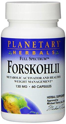 Planetary Herbals | Forskolin (Forskohlii) | Volles Spektrum | 130 mg | 60 Kapseln
