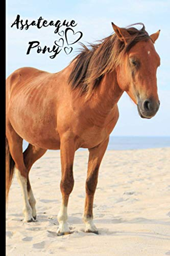 Assateague Pony Notebook: Composition Notebook 6x9' Blank Lined Journal