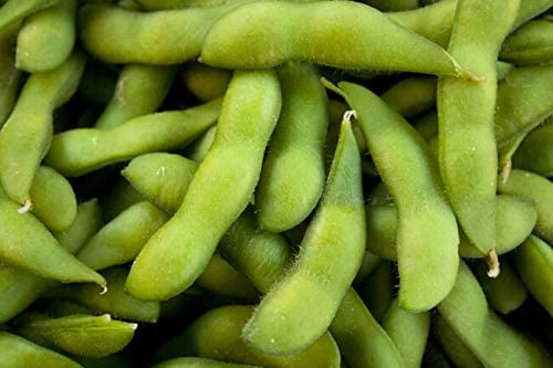 PAPCOOL Besweet 5 ☆ very popular Early Edamame Edible 25 Nashville-Davidson Mall Séẹds No Soybean