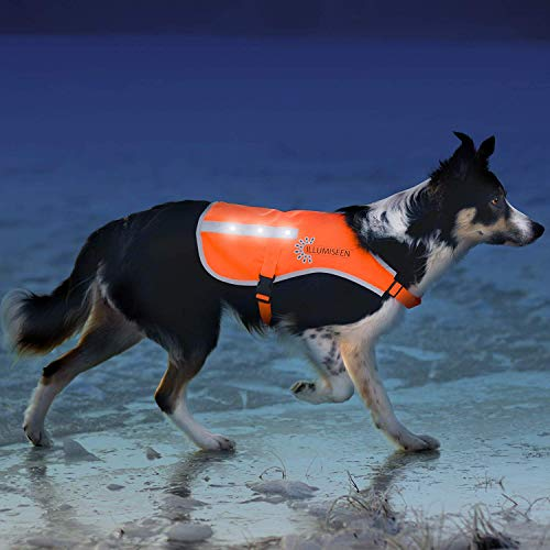 Illumiseen LED Dog Vest | Orange Safety Jacket with Reflective Strips & USB Rechargeable LED Lights | Increase Dog's Visibility When Walking, Running, Training Outdoors (Small, Orange)
