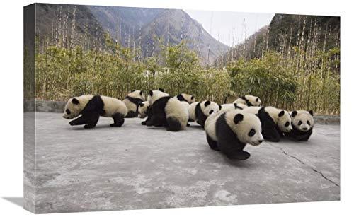 Global Gallery Cachorros Panda Gigantes, Reserva Natural de Wolong, Arte en Lienzo...