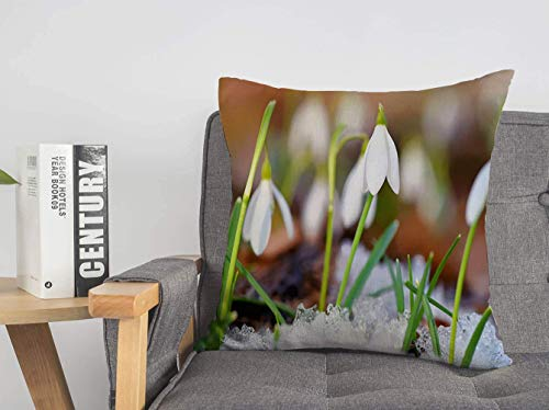 Throw Pillow Cover Snowdrops Blooming Green Galanthus in Spring Forest Harbingers Warming Nature Season Parks Outdoor Soft Linen Decorative Pillows Cushion Cover for Couhc Bed 20x20 Inch