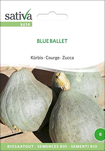 Sativa Rheinau kü14 Kürbis Blue Ballet (Bio-Kürbissamen)