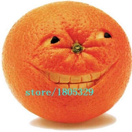 Bloom Green Co. GGG/sac Balcon 50pcs Patio pot arbres fruitiers Graines Plantée Kumquat Graines orange Tangerine Citrus: Blanc