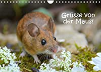 Gruesse von der Maus! (Wandkalender 2022 DIN A4 quer): Zauberhafte Bilder einer kleinen Maus! (Monatskalender, 14 Seiten )
