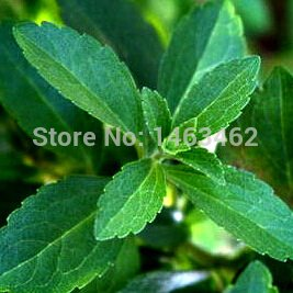 Best Selling!!! Stevia Seeds, Stevia Herbs Seeds Green Herb, Stevia rebaudiana Semillas for Garden Planting - 200 particles