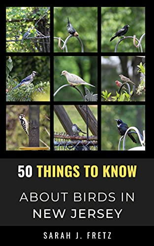 50 Things to Know About Birds in New Jersey : Birding in the Garden State (50 Things to Know About Birds- United States Book 7) (English Edition)