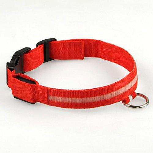 Collier de sécurité LED clignotant pour chien