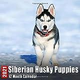 Mini Calendar 2021 Siberian Husky Puppies: Cute Siberian Husky Puppy Photos Monthly Small Calendar With Inspirational Quotes each Month