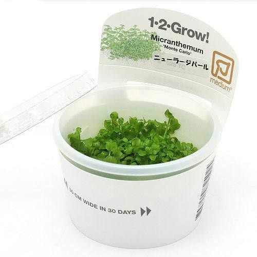 (水草)組織培養1-2-GROW! ニューラージパールグラス トロピカ製(無農薬)(1カップ) 北海道航空便要保温