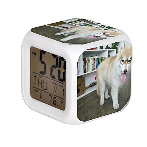 GIAPANO LED Alarm Colock 7 kleuren Desk Gadget Alarm Digital Thermometer Night Cube Light Wohnkultur koper en wit Siberian Husky puppy op parketvloer