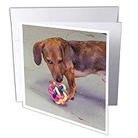 ジャッキー・Popp Nature N Wildlife animals–Dachshund–グリーティングカード Set of 6 Greeting Cards