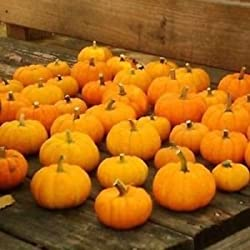 Di solito ci vuole circa 1-4 settimane di tempo per consegnare dopo che l'oggetto è stato spedito. Si prega di controllare il tempo di consegna prima di effettuare gli acquisti. Pumpkin Jack Be Vegetable Seeds Little (Cucurbita pepo) 200 + Semi