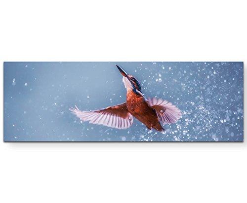 Paul Sinus Art Leinwandbilder | Bilder Leinwand 120x40cm Eisvogel im Wasser