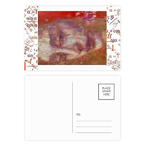 Rode Sjaal Haar XJJ Olieverfschilderij Formule Postkaart Set Thanks Card Mailing Zijde 20 stks