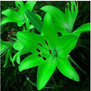 lily graines de fleurs des plantes en pot parfum graines de nénuphar purifient l'air de bonsaï d'intérieur mélange des couleurs 50 pcs / sac