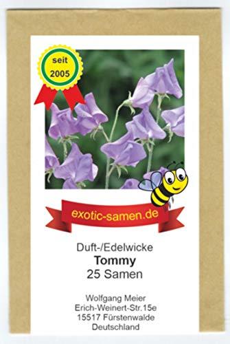 Edelwicke - Duftwicke - Bienenweide - Tommy - herrlicher Duft - bis 200 cm - 25 Samen
