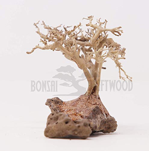Bonsai Driftwood Mini Aquarium Tree BS (3.5 Inch Height) Natural, Handcrafted Fish Tank Decoration | Helps Balance Water pH Levels, Stabilizes Environments | Easy to Install