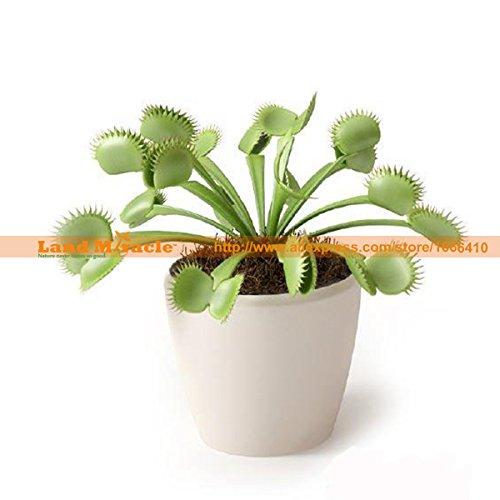 50 / Graines PCCarnivorous Catchfly plante printemps Dionée Attrape Plantes Insectes drôle Balcon Jardin Terrain Miracle # LMH18