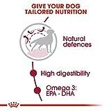 Royal Canin Medium Adult 25 - 6
