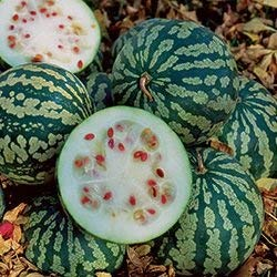 10 graines de SF112 Citron Melon (Citrullus lanatus)