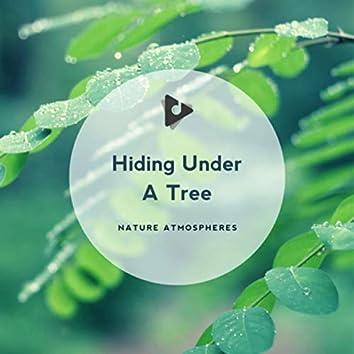 Hiding Under A Tree