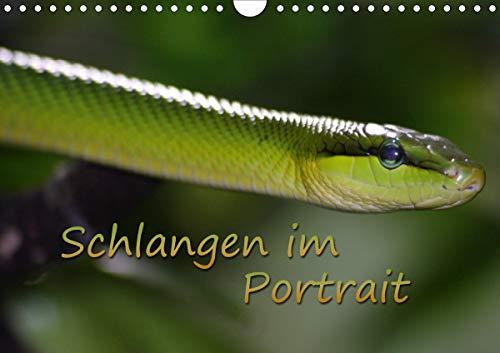 Schlangen im Portrait (Wandkalender 2021 DIN A4 quer)