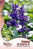 PLAT会社-SEEDSオリジナル包装ブルーサルビアの種多年生セージ種子香りサルビアジャポニカサルビアfarinacea、バルコニーの花の種 - 35個