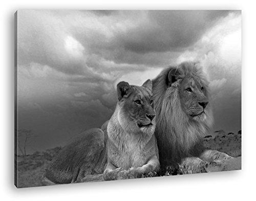 deyoli Löwen in Afrika Effekt: Schwarz/Weiß im Format: 120x80 als Leinwandbild, Motiv fertig gerahmt auf Echtholzrahmen, Hochwertiger Digitaldruck mit Rahmen, Kein Poster oder Plakat
