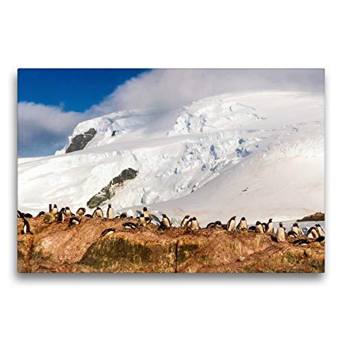 CALVENDO Toile Pingouin colonie au Paradis Antarctique 75 x 50 cm Naturel, Special Edition, Image sur châssis, prêt Image sur Textile de qualité, Toile Impression, Pas de Poster