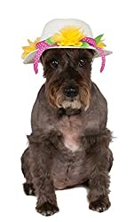 Easter Outfits For Dogs - Brown Schnauzer dog wearing a white Easter bonnet hat with yellow flowers.