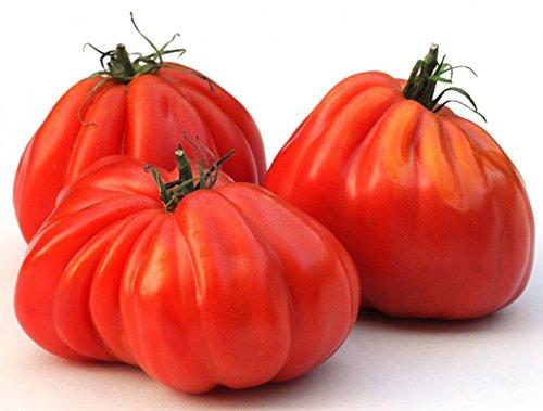 Tomate Ochsenherz - Oxheart, Cuore di bue - 20 Samen
