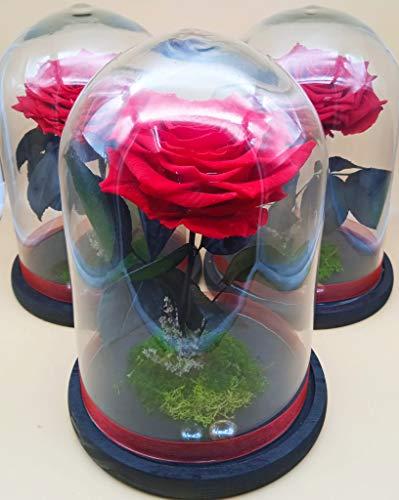Rosa eterna roja. Cúpula de Cristal. Altura 30 cm. Rosa preservada roja...