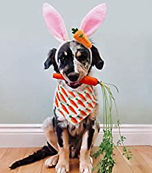 Easter Outfits For Dogs - Dog wearing a bunny ears headband and an Easter bandana, sitting holding a carrot in his mouth.