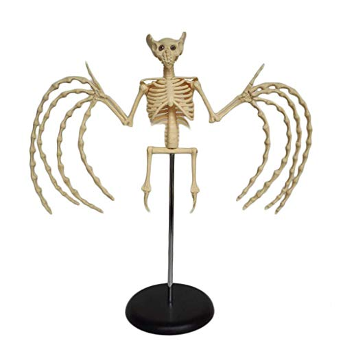 AXAA Tierskelett Modell Fledermausskelett Anatomisches Modell mit Basis - PVC-Material Lehrmodell für die medizinische Ausbildung