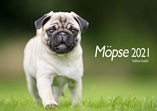 Edition Seidel Möpse Premium Kalender 2021 DIN A3 Wandkalender Hundekalender Hunde Mops
