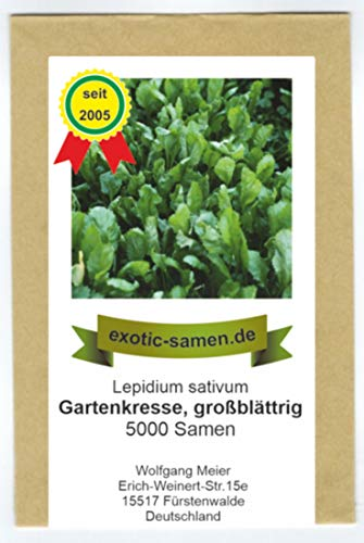 Gartenkresse großblättrig - Lepidium sativum - 5000 Samen