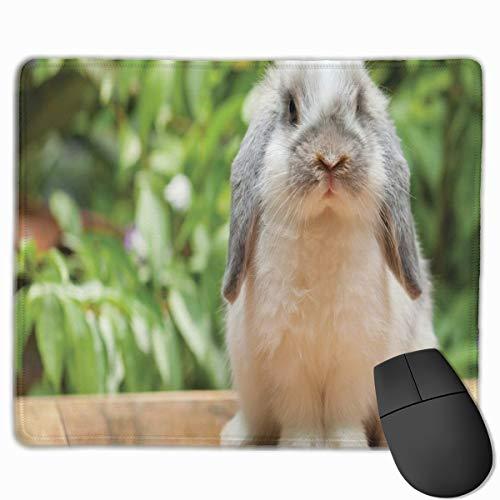 HUAYEXI Stoff Mousepad,Foto eines holländischen Lop Kaninchens, das auf den grünen Pflanzen eines hölzernen Brettes am Hintergrund steht,Rutschfest eeignet für Büro und Gaming Maus