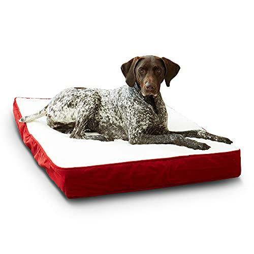 Oscar Orthopedic Medium (42 x 30 in.) Red Rectangle Pillow Style Dog Bed
