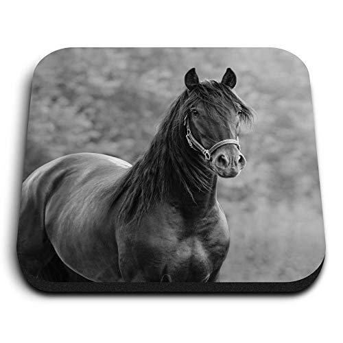 Destination 35254 - Imanes cuadrados de madera de densidad media, diseño de caballo andaluz para oficina, gabinete y pizarra, pegatinas magnéticas, diseño de caballo