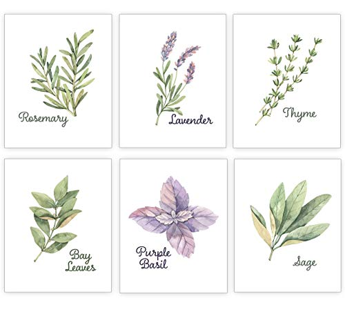 Home Decor Kitchen Herb Art Prints - Modern Farmhouse Watercolor Botanical Wall Artwork - Dining Room Posters - Rosemary Thyme Basil Sage Bay Leaves Lavender - Set of 6-8x10 UNFRAMED