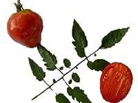 ハート形の 赤ベリートマト 種 6粒
