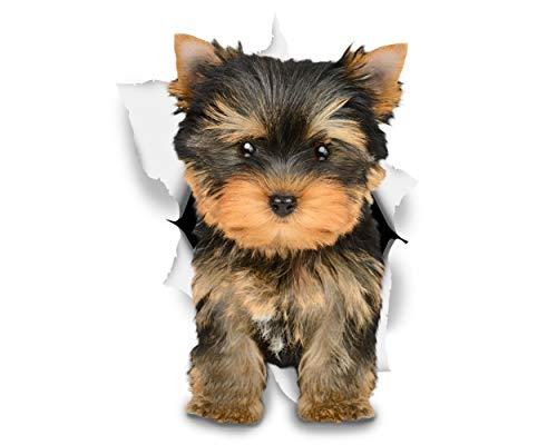 Winston & Bear Adesivi da Parete Cane Yorkshire Terrier - Adesivi Cani 3D Yorkie - 2 Confezioni - Frigorifero - Bagno - Camera - Automobile - Vendita al Dettaglio