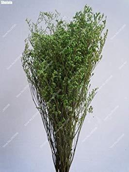 Vistaric 150pcs / sac graine de gazon exotique Saint Valentin de charme multicolore amants herbe fleurs Bonsaï plante ornementale pour Mini jardin décor 10
