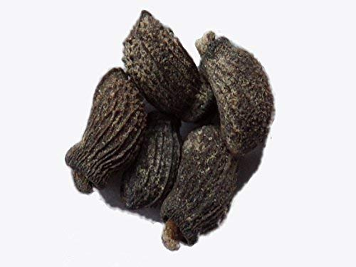 Bourrache Blanche - 5 Graines - Borago Officinalis Alba - Borage - (Engrais Vert - Green Manure) - SEM03