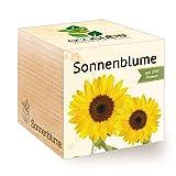 Feel Green Ecocube-Girasole Certificato Biologico, Idea Regalo sostenibile (100% Eco Friendly), Grow Your Own, Set per Coltivazione, Piante nel cubo di Legno, Made in Austria