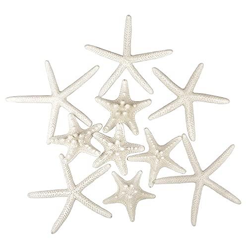 10 PCS Starfish 2-6 Inch Mixed Ocean Beach Starfish-Natural Colorful Seashells Starfish Perfect for Wedding Decor Beach Theme Party, Home Decorations, DIY Crafts, Fish Tank