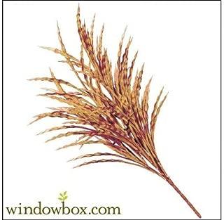 Windowbox 21