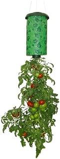 dirty girl tomato seeds