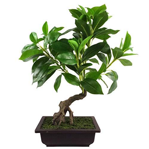 Leaf Árbol Artificial de 50 cm, Hoja Grande Ficus Bonsai, 60 cm